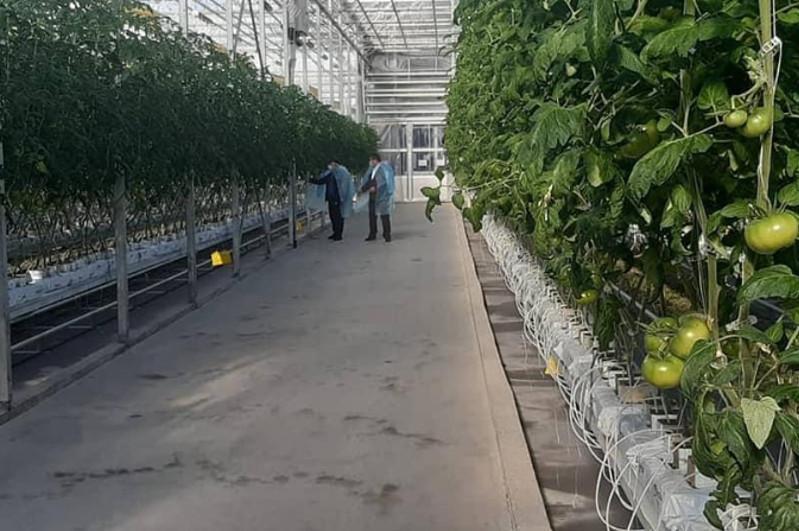 До 3500 тонн продукции выращивают в  год в теплице в Сайрамском районе