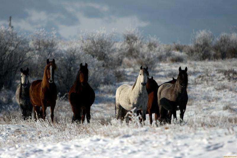 Наказан хозяин погибших от наезда поезда лошадей в Павлодарской области