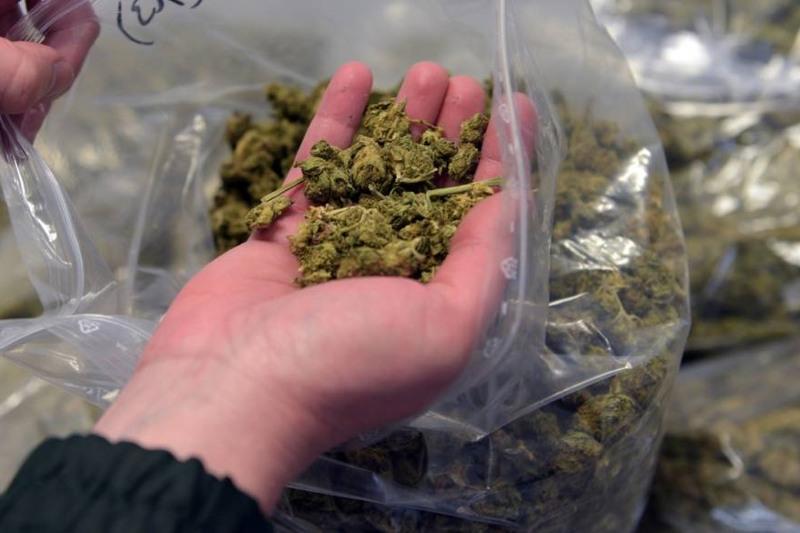 Шуда жергілікті тұрғынның үйінен 17 келіден астам марихуана тұқымы табылды