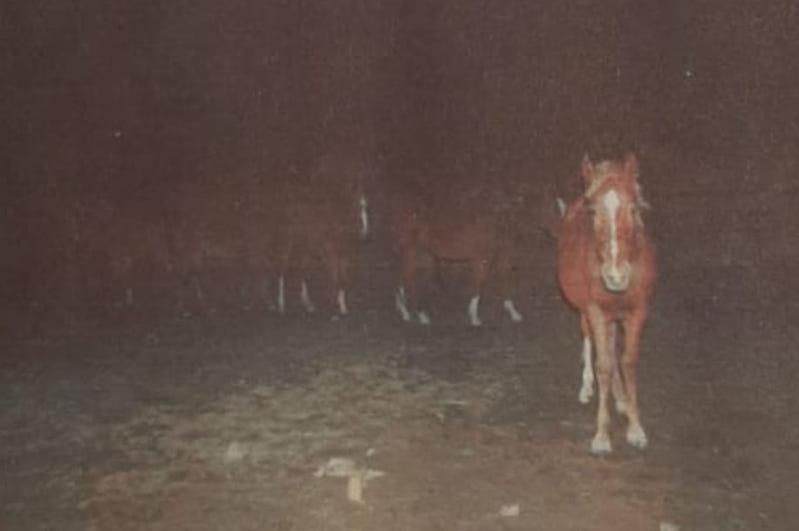 Полицейский обхитрил скотокрада в Туркестанской области