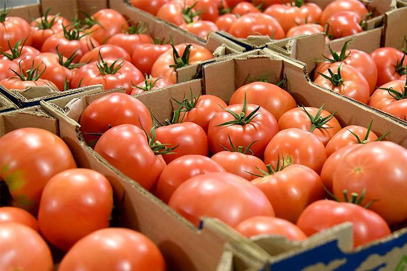 俄罗斯将解除哈萨克斯坦西红柿进口限制