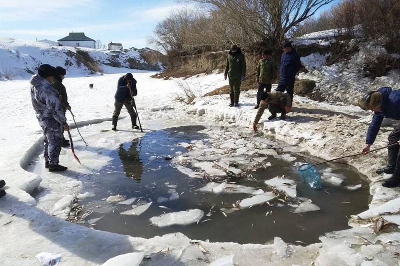 Замор рыбы произошел в реке Аягозв ВКО