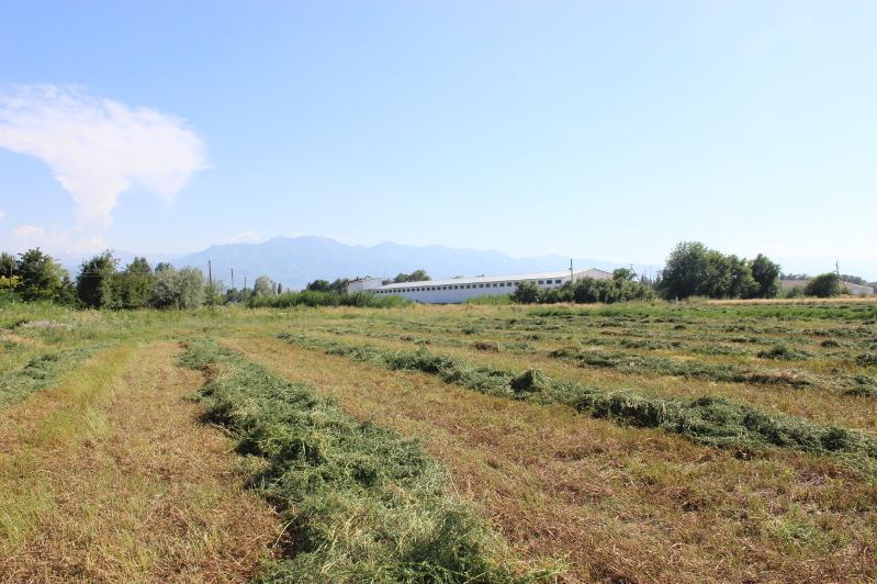 Как рационально использовать земли сельскохозяйственного назначения