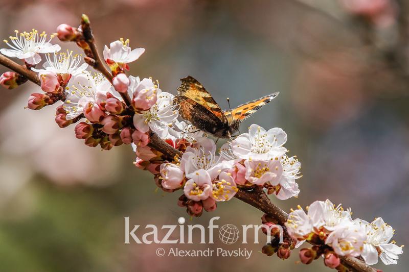 Весна придет вовремя – прогноз погоды на март в Казахстане