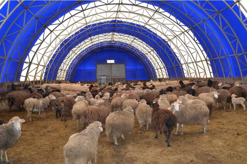 Karaganda region to build mega sheep farm