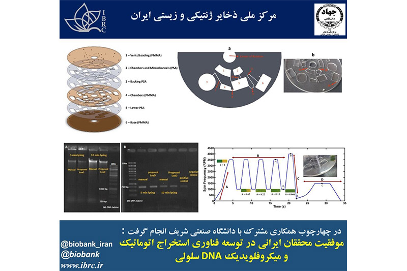 Iranians successful in microfluidic extraction of DNA