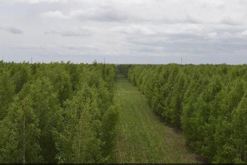 «Зеленый пояс» намерены создать в Темиртау