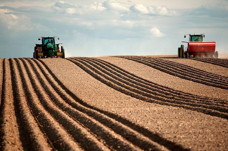 Пятую часть посевных площадей займут масличные в СКО
