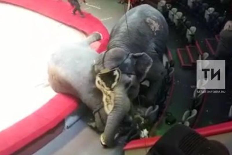 В казанском цирке сорвалось представление из-за драки слонов