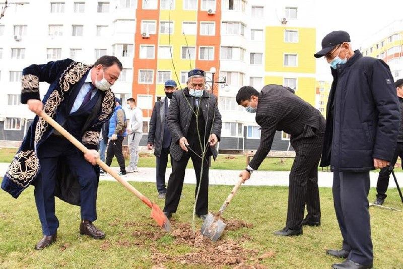 Проект «Таза табиғат»: 250 саженцев можжевельника высажено в Шымкенте