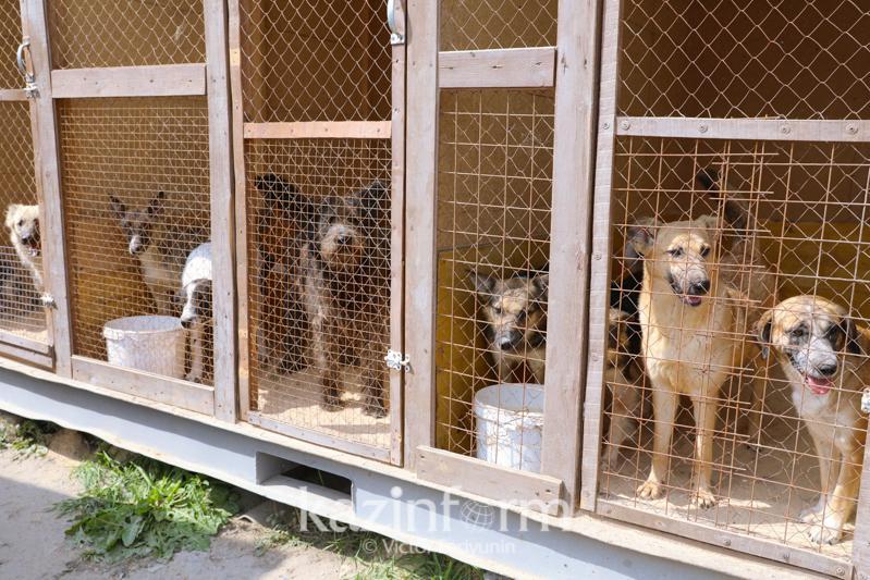 Проект в поддержку бездомных животных стартовал в Казахстане