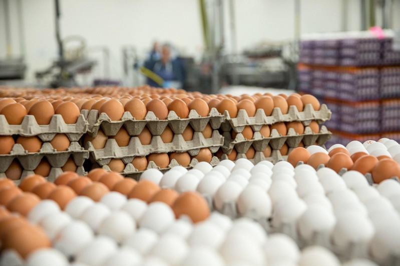 В Алматы установлена предельная цена на куриные яйца