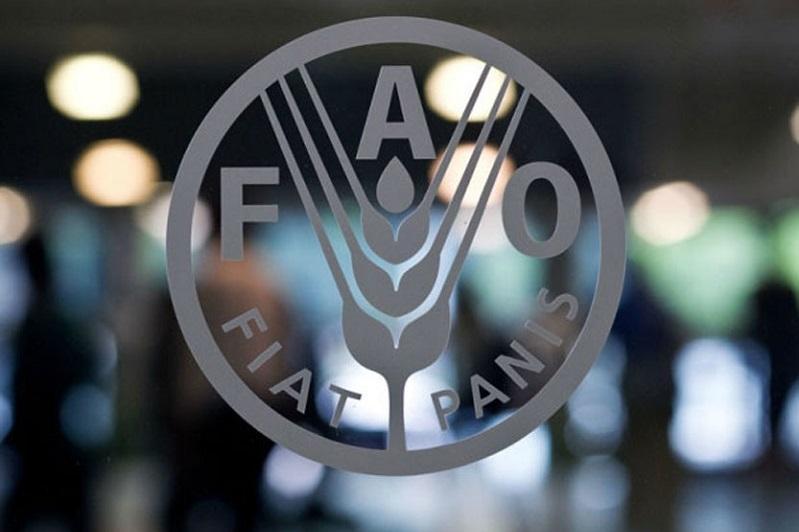 粮农组织:全球食品价格连续第十个月上涨
