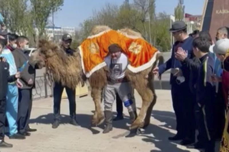 Қазақ балуаны Қажымұқанның 150 жылдығына арнап түйе көтерді