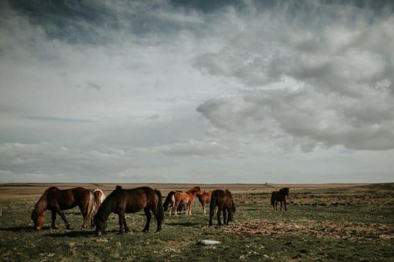 Скот на 174 млн тенге распродали пастухи в Карагандинской области