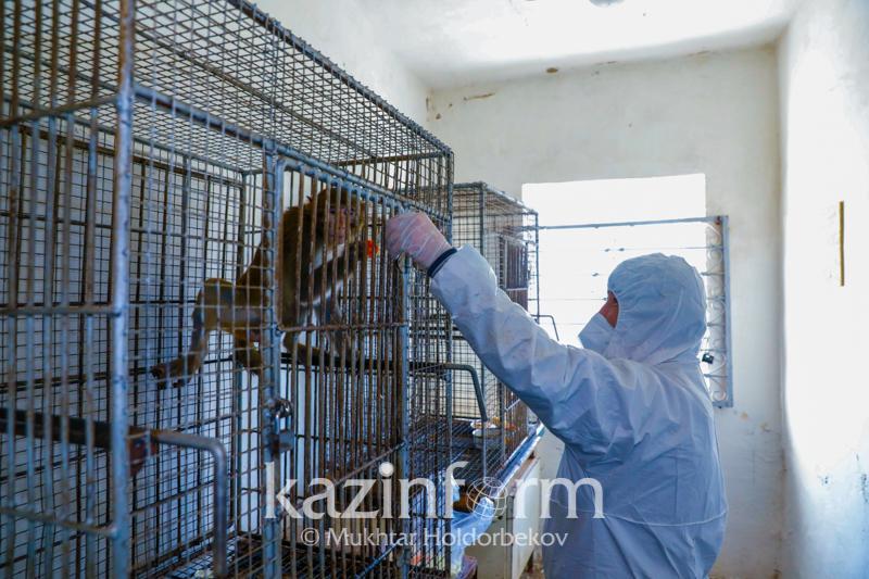Вакцину от коронавируса для животных разработают казахстанские ученые