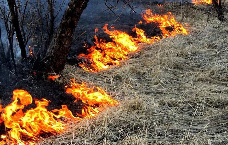 Пожароопасный период наступил в СКО