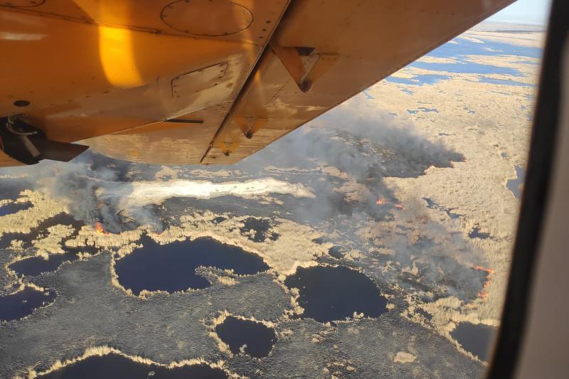 Крупный пожар в лесных массивах произошел в Алматинской области