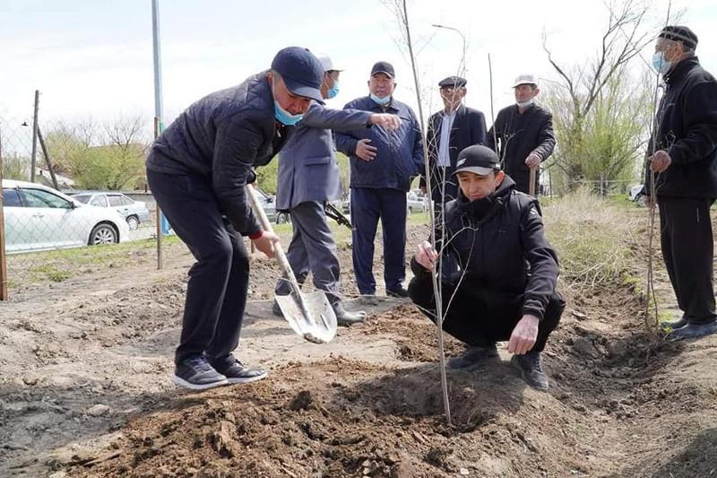 Акция «К 30-летию Независимости - 30 млн деревьев» проходит в Туркестанской области