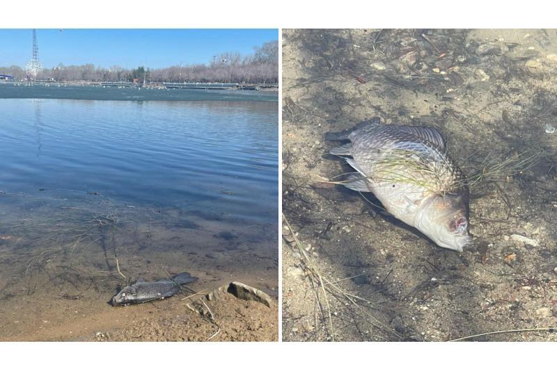 Мертвых рыб обнаружили на берегу озера в центральном парке Караганды