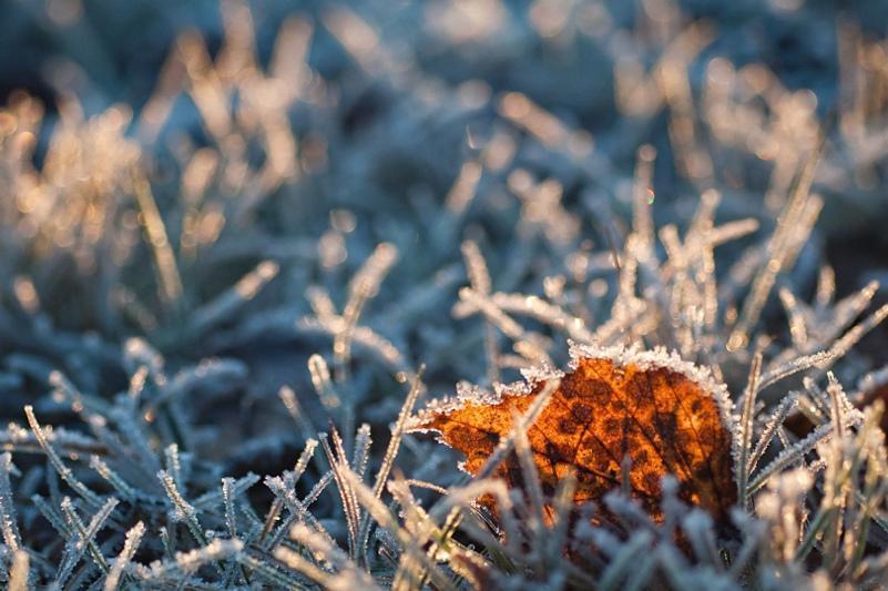 До 12 градусов мороза ожидается в северных и центральных регионах Казахстана