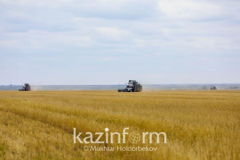 Продлевать срок аренды сельхозземли через конкурс предлагают в Казахстане