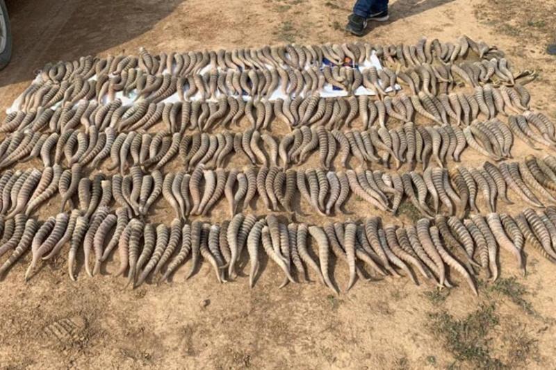 274 штук дериватов краснокнижных животных изъяли полицейские Караганды
