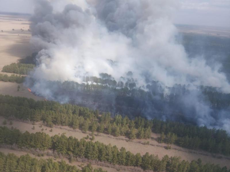 Пожар в резервате «Ертіс орманы»: площадь возгорания достигла 300 га