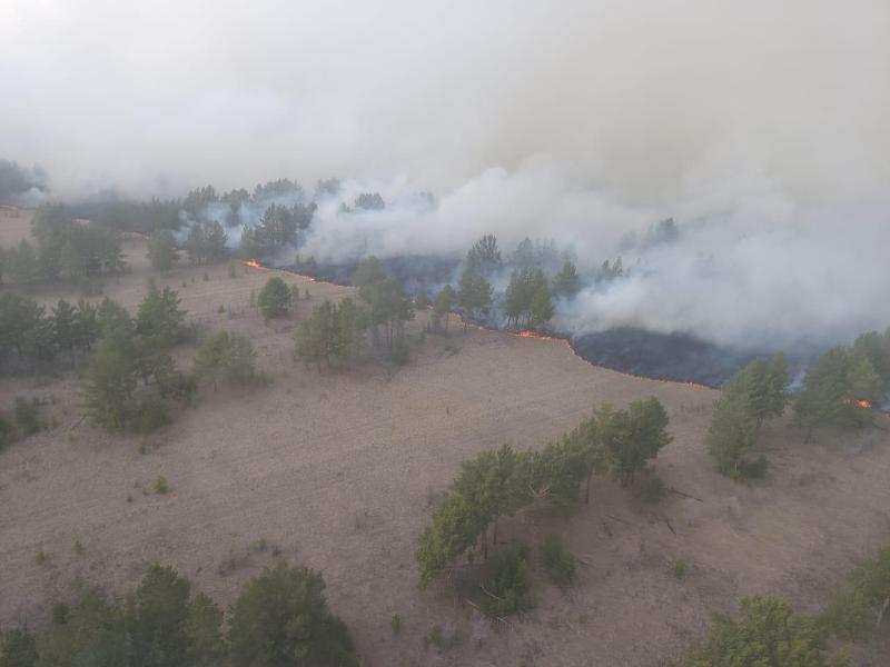 Площадь возгорания в резервате «Ертіс орманы» в Павлодарской области достигла 1000 гектаров