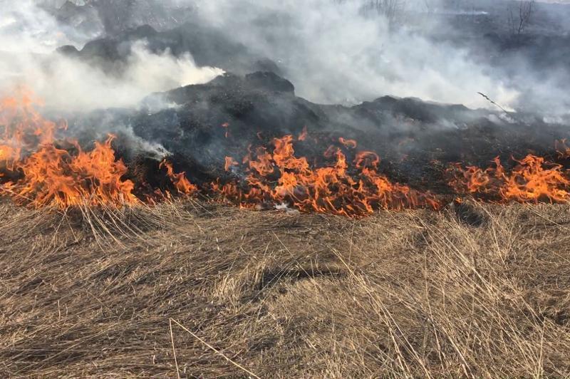 Ликвидирован пожар в резервате «Ертіс орманы»