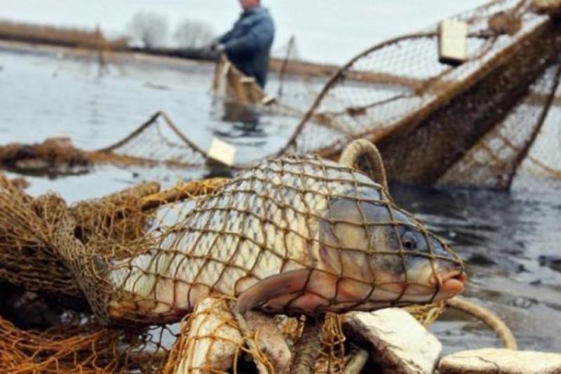 ШҚО-да заңсыз балық аулаған 64 адамға айыппұл салынды