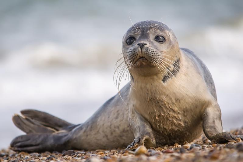一只受伤的小海豹在曼格斯套州获救