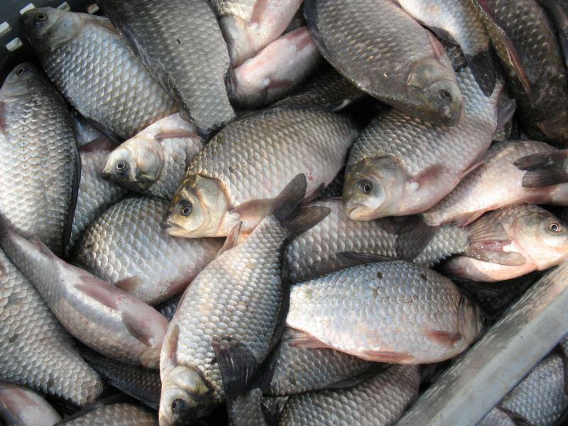 ШҚО тұрғынының көлігінен заңсыз ауланған 150 келіге жуық балық табылды
