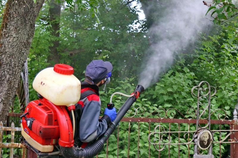 Карантинные зоны для борьбы с вредителями установят в Алматы