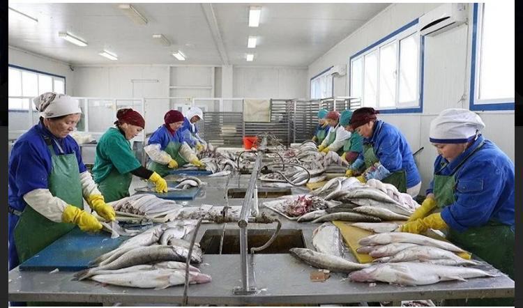 В Кызылординской области объемы выращивания рыбы достигнут 16 тыс. тонн