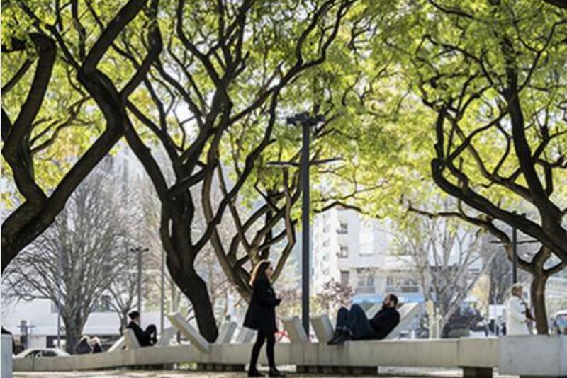Kazakh capital to grow oak alley