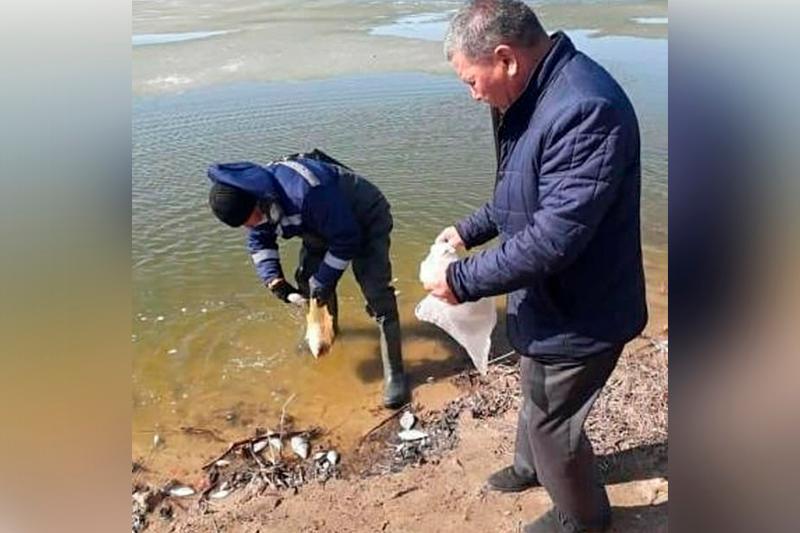 Очередной замор рыбы зарегистрировали в СКО