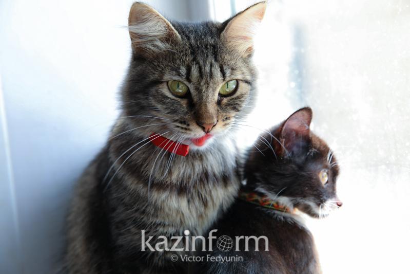 Конкурс малых грантов в поддержку бездомных животных стартовал в Казахстане