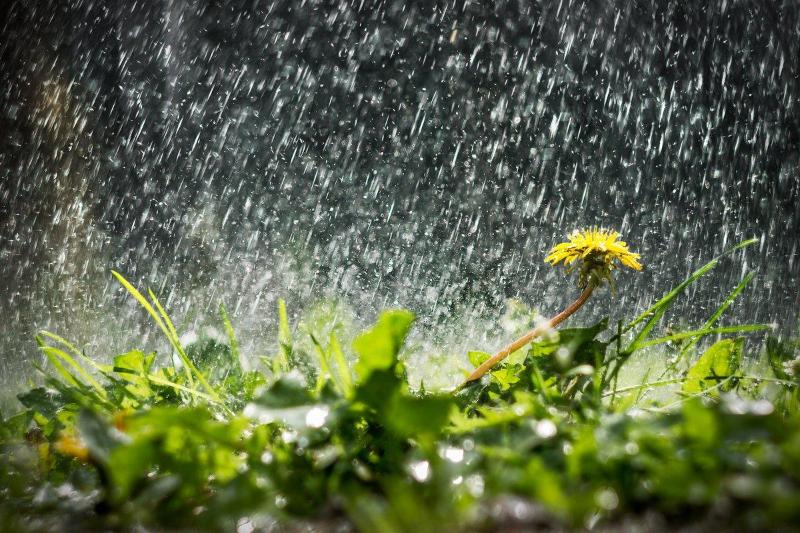 Дожди с грозами ожидаются в Казахстане 5 мая