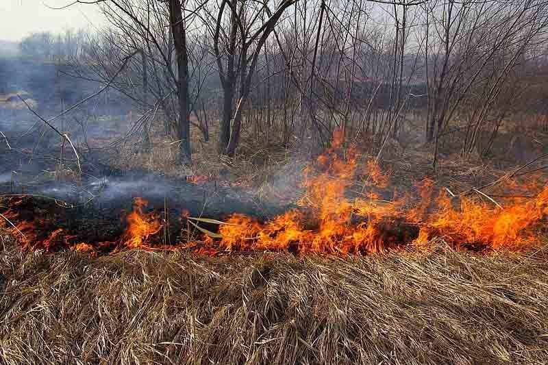 Начато досудебное расследование по факту возгорания сухой травы в СКО