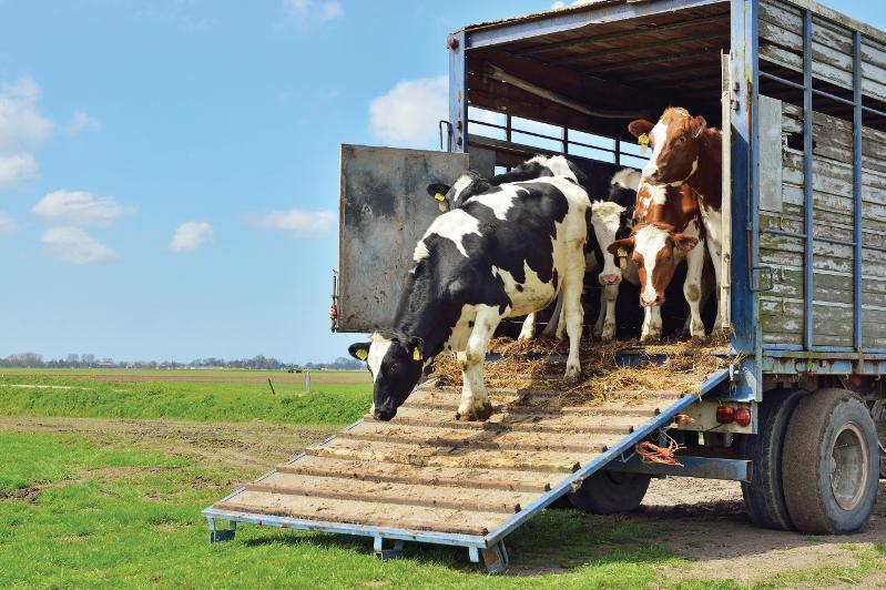 哈俄取消相互间对牲畜和禽类产品的运输限制