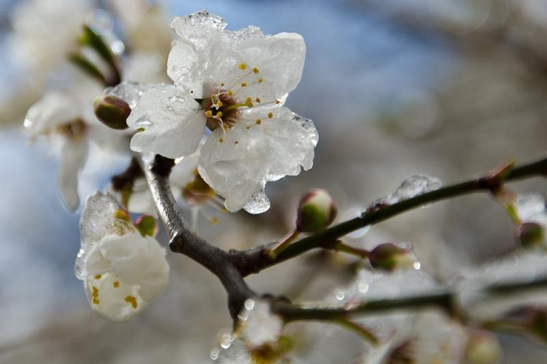 Заморозки прогнозируют 7 мая в трех областях Казахстана