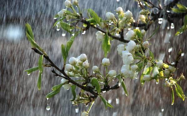 Неустойчивую погоду прогнозируют 8 мая в Казахстане