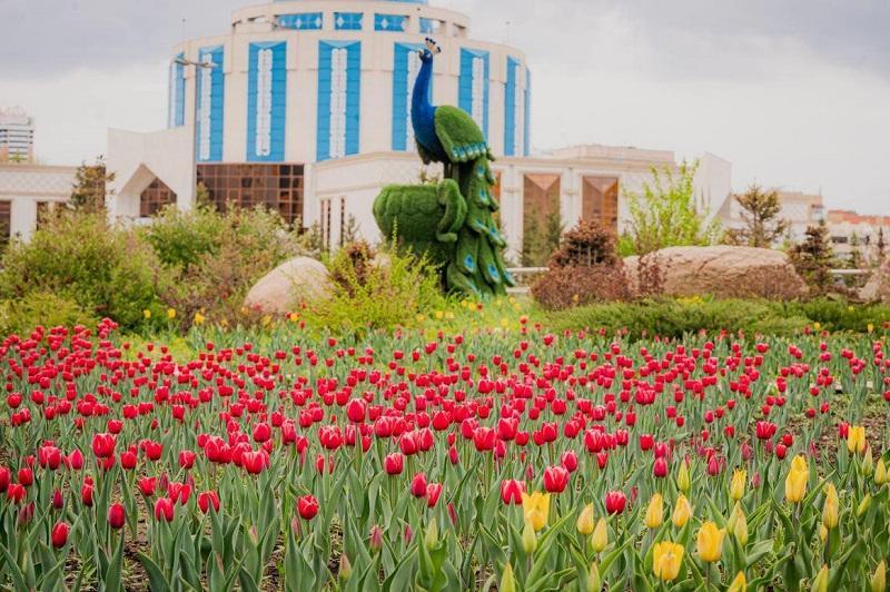 Впервые за 10 лет высаженные тюльпаны зацвели в Нур-Султане