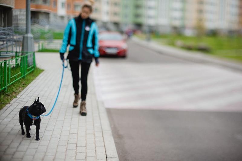 За выгул собак на территории школы наказали жителей Петропавловска