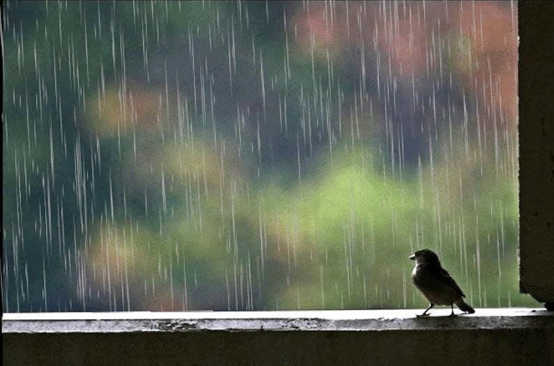 Rain showers forecast for Kazakhstan on May 10