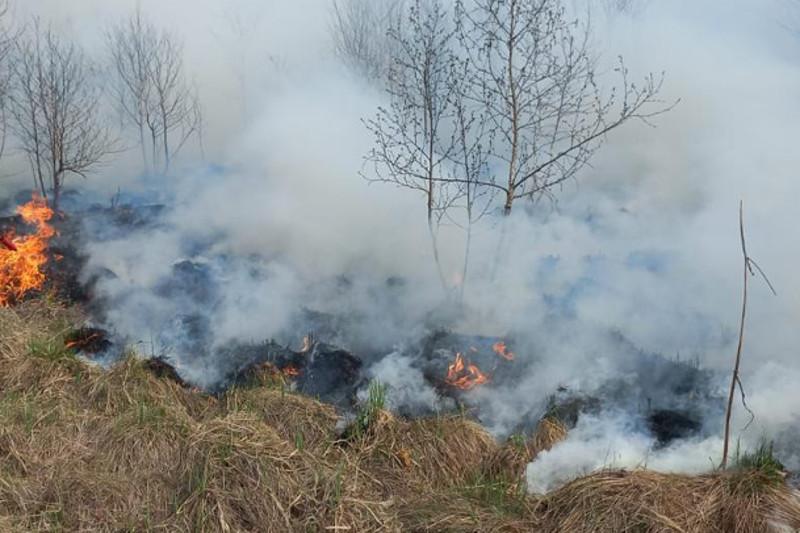 Сотрудники Минэкологии перечислят однодневную зарплату пострадавшим от лесного пожара в Риддере