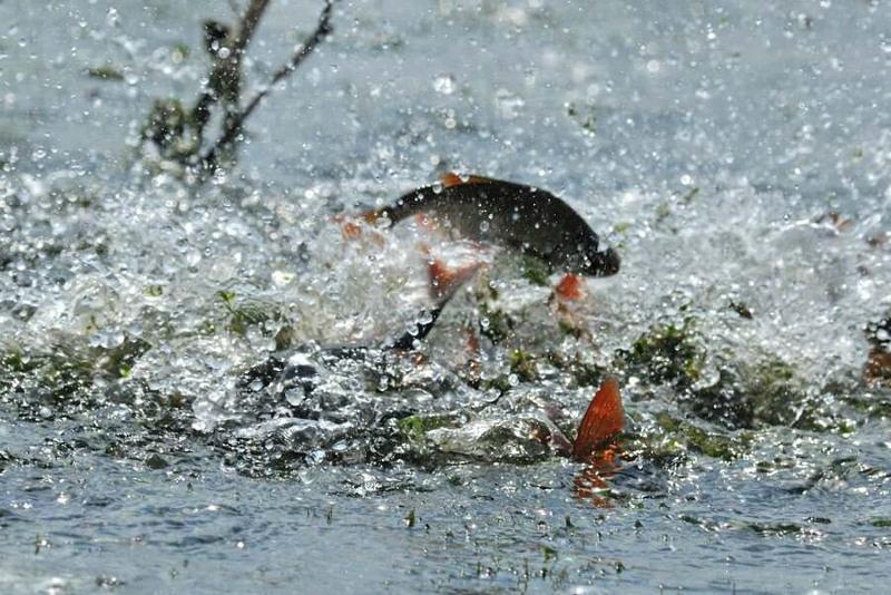Свыше 160 фактов незаконной ловли рыбы выявлено в Алматинской области