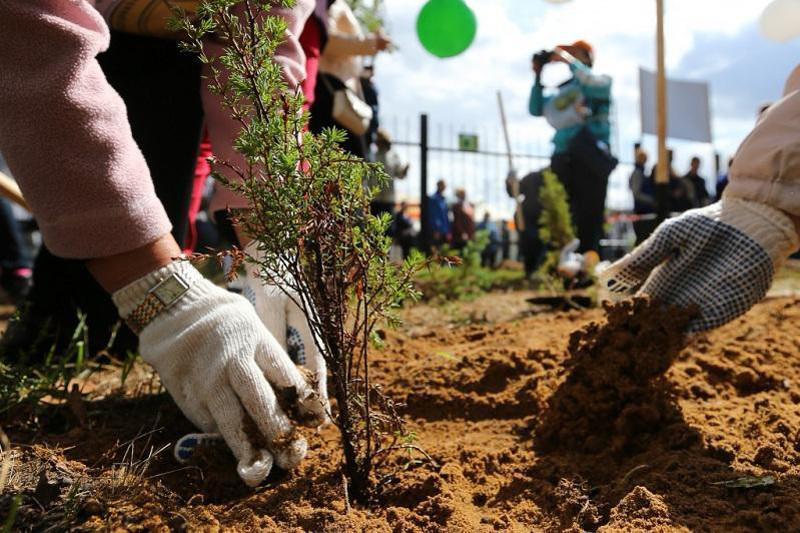 Естелік бағы: Елордалық оқушылар ата-аналарымен бірге ағаш отырғызды