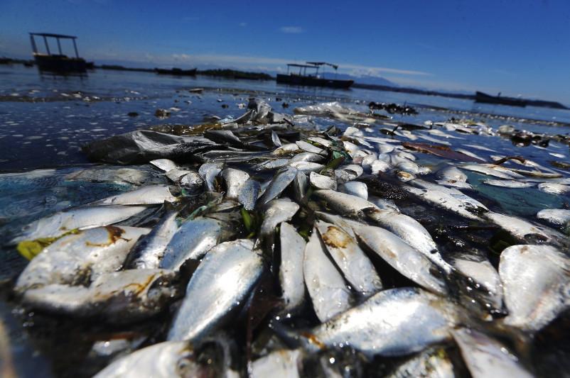 Сколько рыбы погибло в мае, рассказали в Атырау